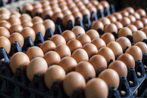 egg-tray-resize